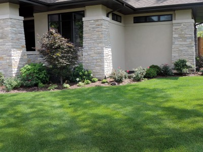Solar Japanese Maple Landscaping Project