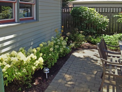 Oak Park Hydrangeas in Bloom Landscaping Project