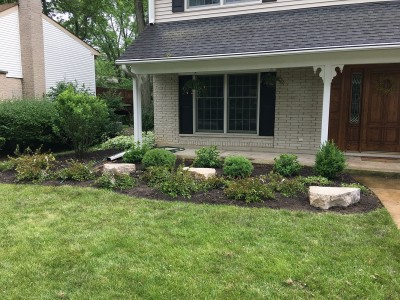 Front yard_ Boxwoods Arborvitaes Hydrangeas and outcropping stones