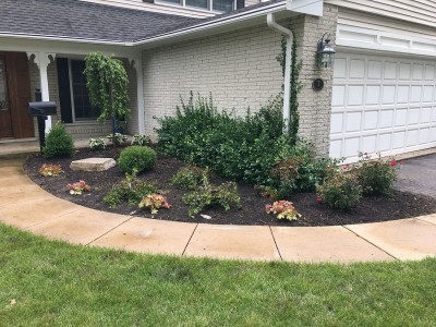 Front yard_ Weeping Cherry Tree Arborvitaes Knockout Roses Coral Bells and Boxwoods