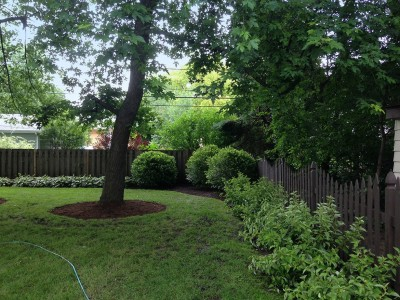 River Birch Trees, Viburnums and Red Twig Dogwoods Arlington Heights Backyard Landscaping Project Backyard