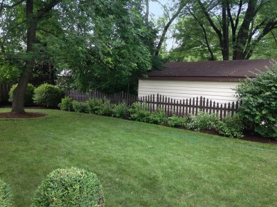 River Birch Trees, Viburnums and Red Twig Dogwoods Arlington Heights Backyard Landscaping Backyard
