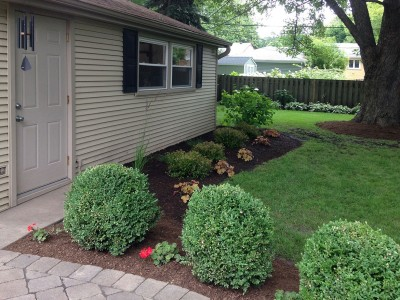 Spireas, Ornamental Grasses and Coral Bells   Arlington Heights Backyard Landscaping Backyard