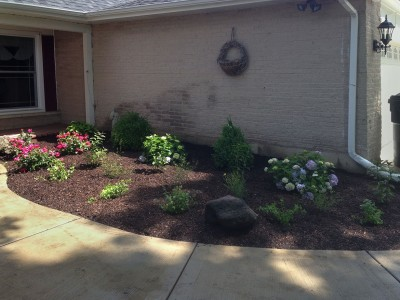 Boxwoods, Rose Bushes, Hydrangeas and Assorted Perennials   Front Entrance Landscape Remodel in Arlington Heights