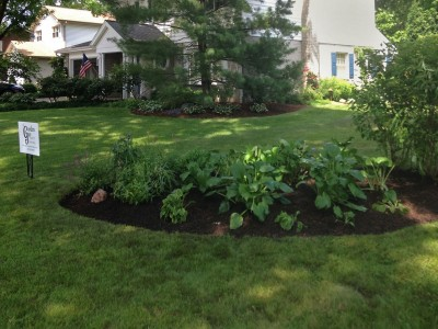 Front Island with Hostas and Shade Perennials   Front Landscape Remodel in Arlington Heights