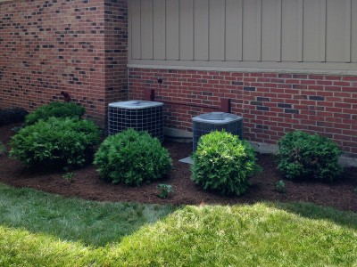 Arborvitae Screening, Elk Grove