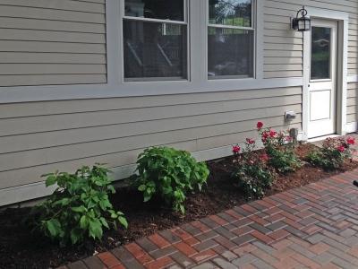 Backyard-Roses-and-Hydrangeas