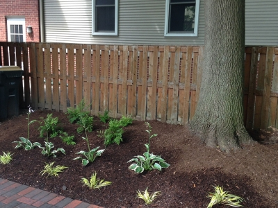 Backyard-Shade-Perennial, Arlington-Heights