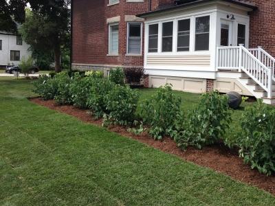 Viburnum-Hedge-with-New-Sod, Arlington-Heights