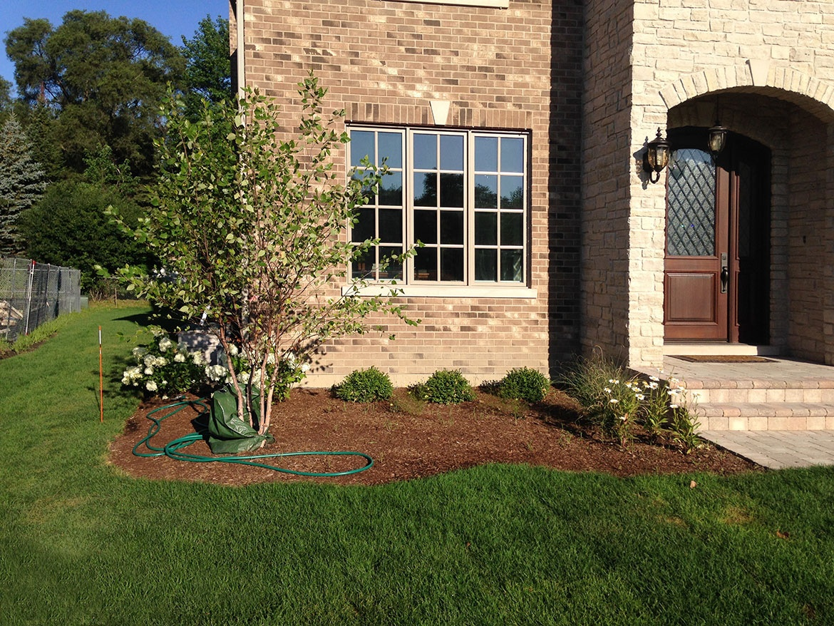 River-Birch,-Hydrangeas,-Boxwoods,-Ornamental-Grasses-and-Daisys---New-Construction-in-Northbrook
