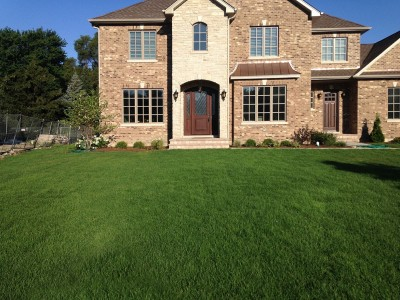 Front Entrance view, New Sod and Plantings   New Construction in Northbrook Entrance Sod
