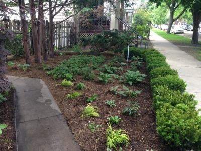 Front Entrance Yard - Wrigleyville Landscaping