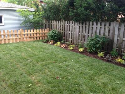 Hydrangeas and Perennials - Wrigleyville Landscaping
