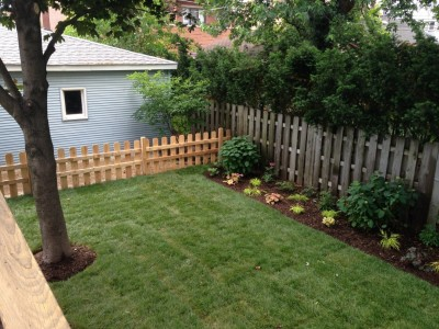 New Yard with Fence   Wrigleyville Landscaping